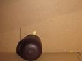 Kinderball267.JPG