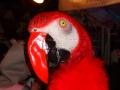 Grosser Maskenball 94